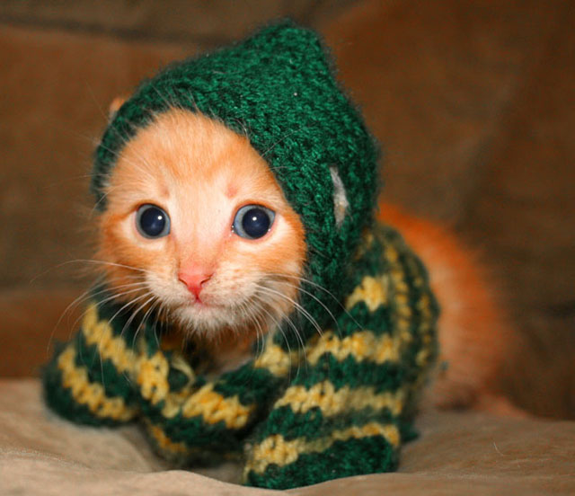 Cute Kittens Wearing Hats in Cute Hats Kittens With